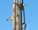 Migrating birds in November