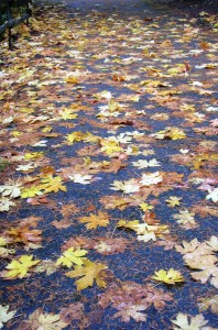 Autumn Leaves, Orleans